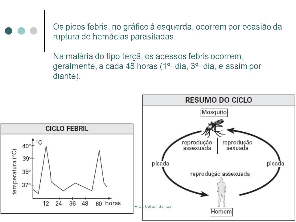 Os picos febris, no gráfico à esquerda, ocorrem por ocasião da ruptura de hemácias parasitadas. Na malária do tipo terçã, os acessos febris ocorrem, g