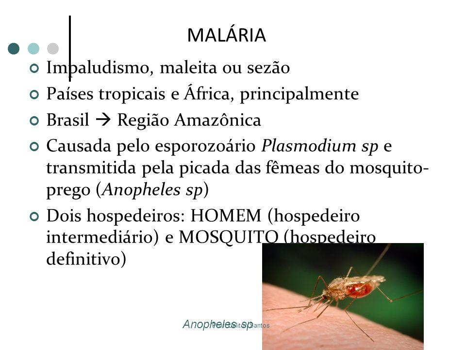 MALÁRIA Impaludismo, maleita ou sezão Países tropicais e África, principalmente Brasil  Região Amazônica Causada pelo esporozoário Plasmodium sp e tr