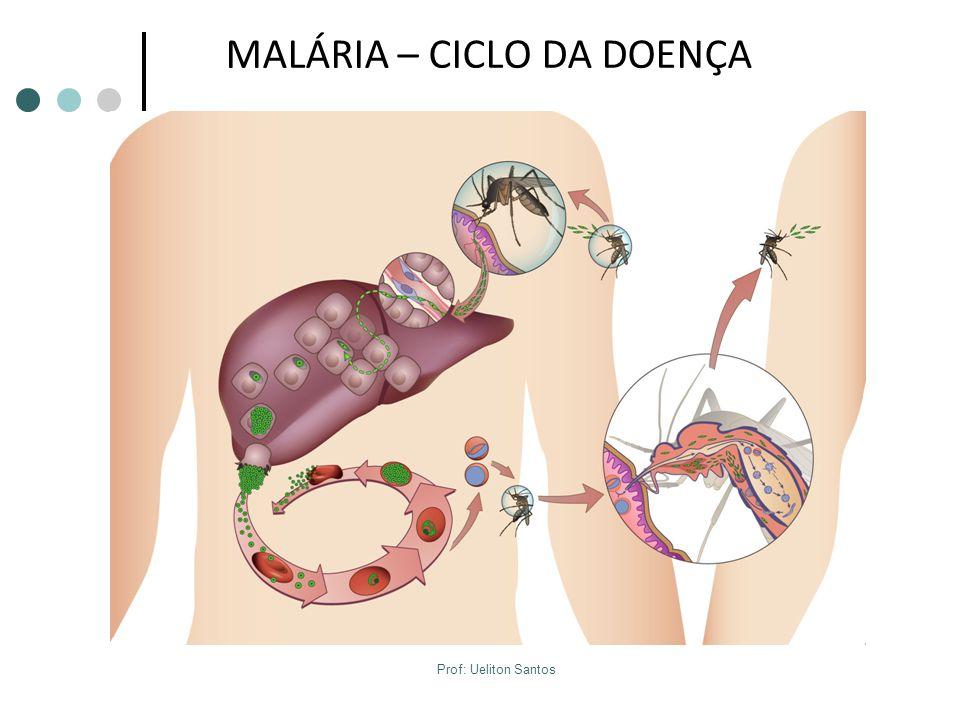 MALÁRIA – CICLO DA DOENÇA Prof: Ueliton Santos