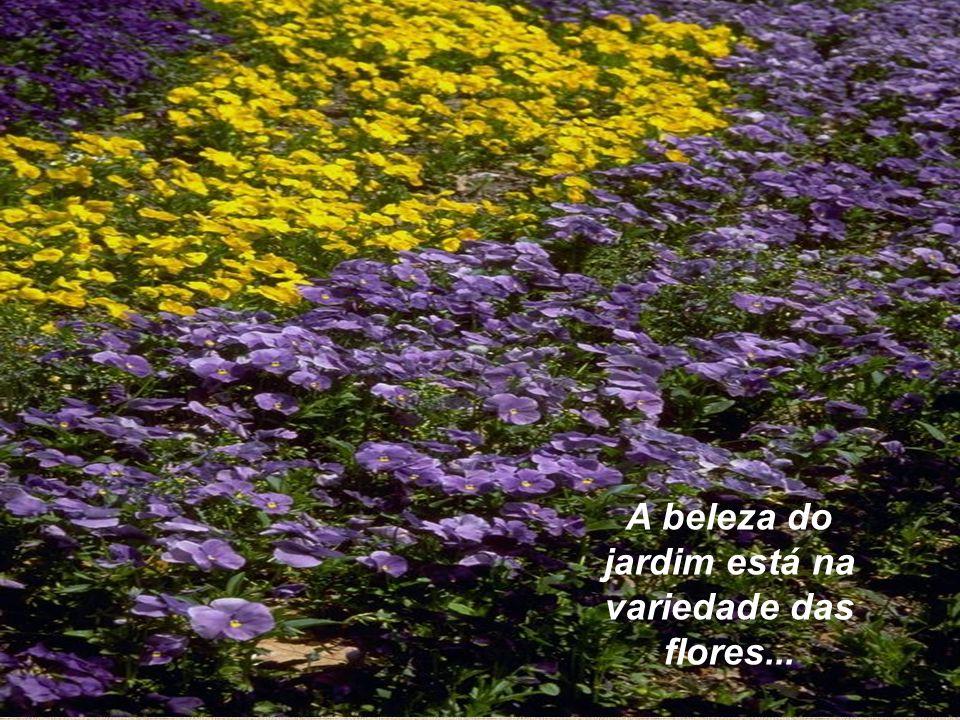 34 A beleza do jardim está na variedade das flores...