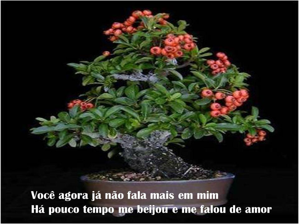 Formatação : zecarrazzoni@yahoo.com.br Criticas e opiniões