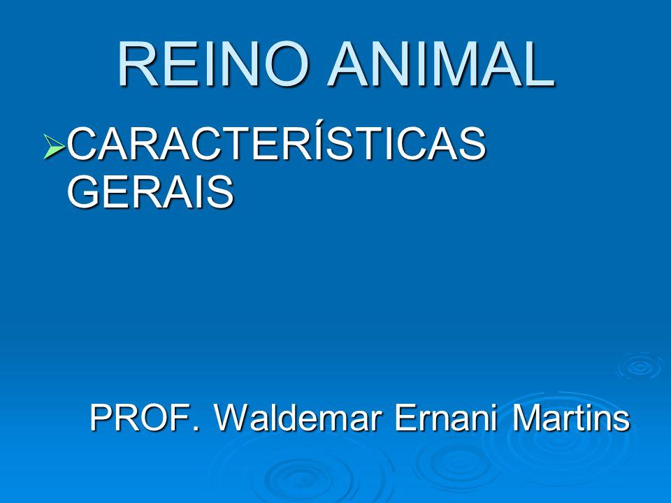 REINO ANIMAL  Organismos pluricelulares (multicelulares).