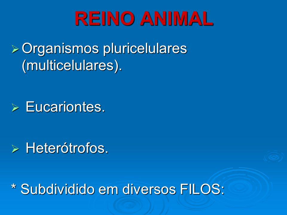 REINO ANIMAL  INVERTEBRADOS - Poríferos - Cnidários - Platelmintos - Nematelmintos - Anelídeos - Artrópodes - Moluscos - Equinodermos  VERTEBRADOS - Peixes - Anfíbios - Répteis - Aves - Mamíferos VERMES