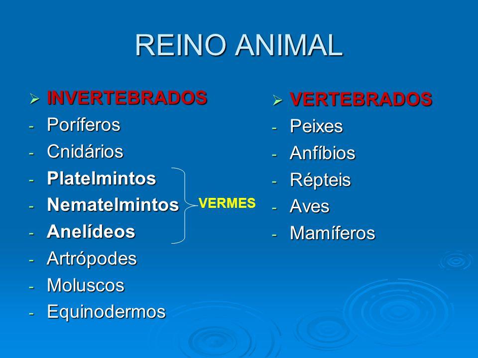  TIPOS DE SIMETRIA Simetria radial e bilateral respectivamente.