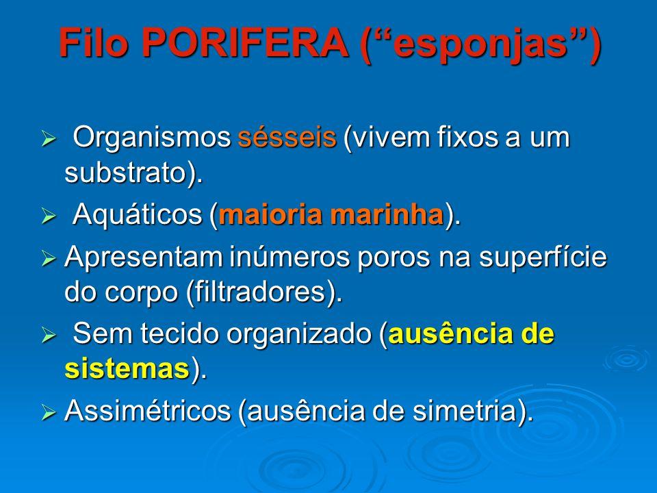 Filo PLATYHELMINTHES  Vermes de corpo achatado (vida livre ou parasitas).
