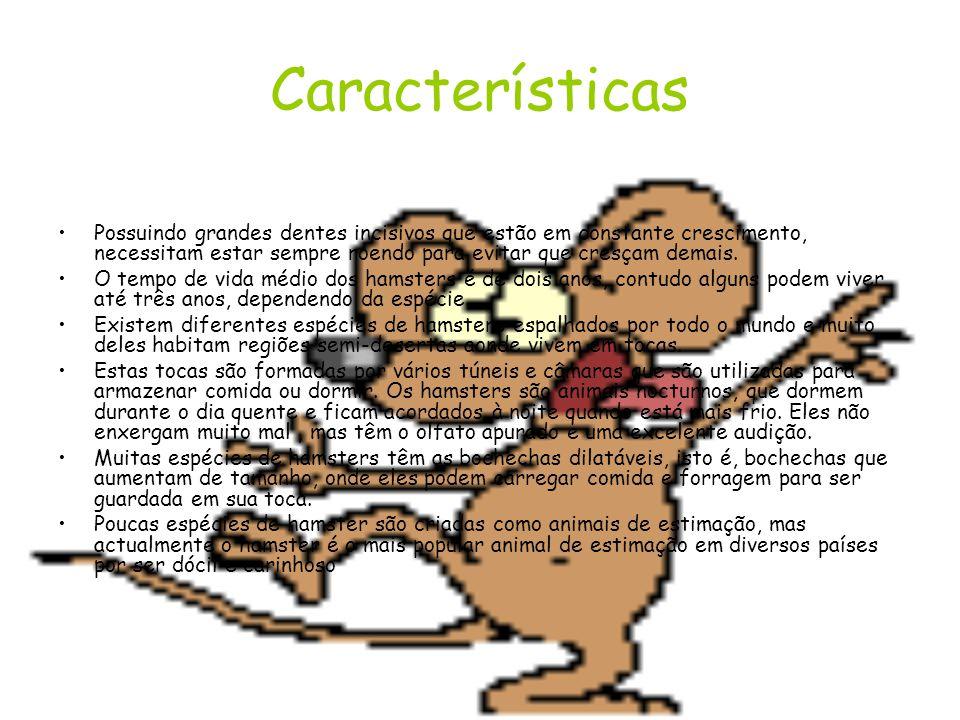 Hamster Hamster é uma designação comum a diversos pequenos mamíferos roedores, da sub-família Cricetinae, encontrados na África e Ásia, dotados de gra