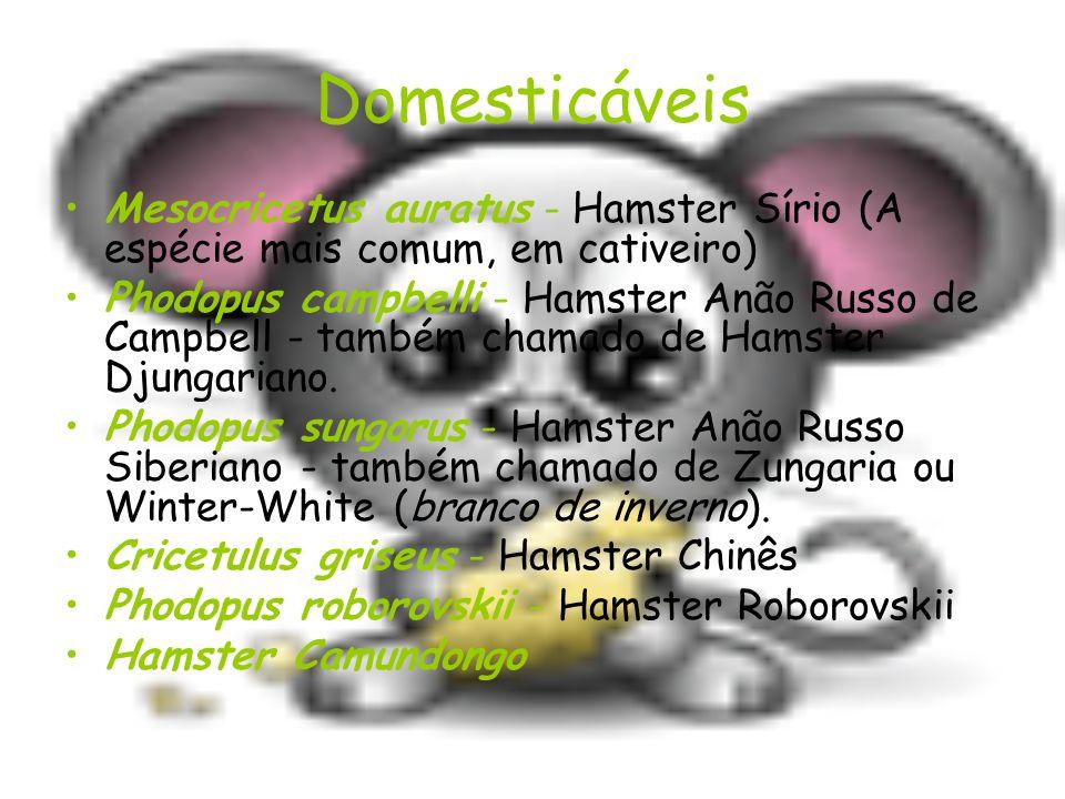 Domesticáveis Mesocricetus auratus - Hamster Sírio (A espécie mais comum, em cativeiro) Phodopus campbelli - Hamster Anão Russo de Campbell - também chamado de Hamster Djungariano.