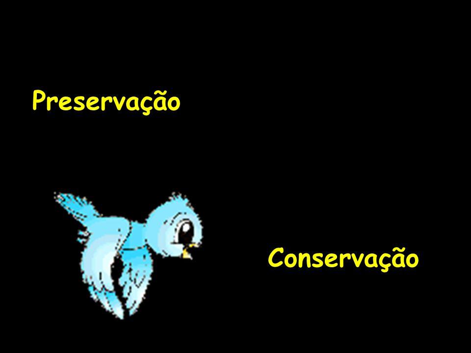 1992 Conferencia sobre o Meio Ambiente e o Desenvolvimento, UNCED, Rio/92 Criação da Agenda 21 Tratado de Educação Ambiental para Sociedades Sustentáveis FORUN das ONG's- compromissos da sociedade civil com a Educação Ambiental e o Meio Ambiente.