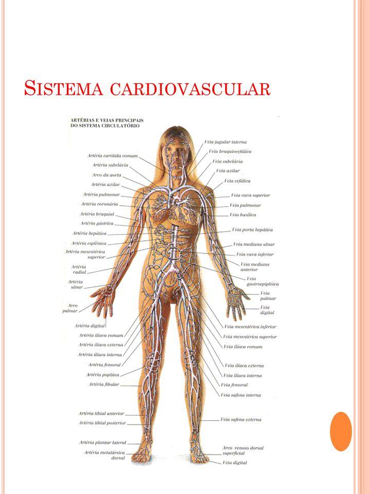 S UAS FUNÇÕES : O sistema cardiovascular ou circulatório é uma vasta rede de tubos de vários tipos e calibres, que põe em comunicação todas as partes do corpo.