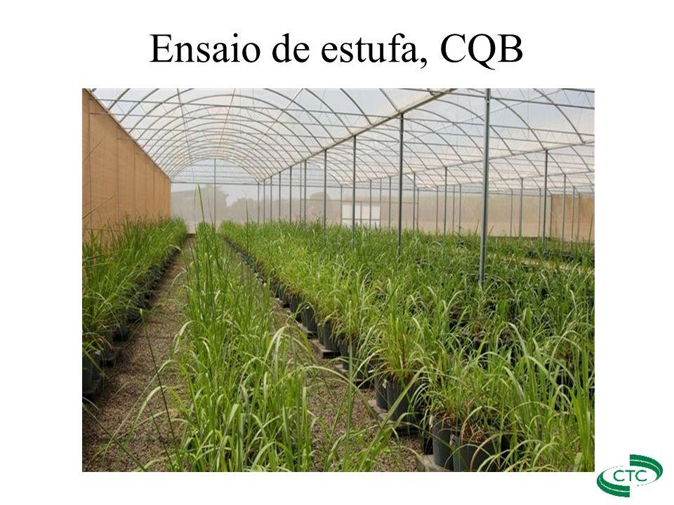 Ensaio de estufa, CQB