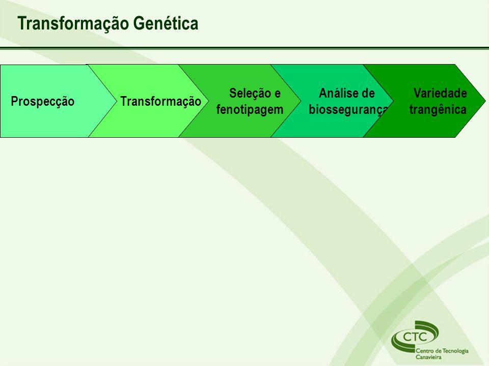 Transformação Seleção e fenotipagem Análise de biossegurança Variedade trangênica Prospecção Transformação Genética