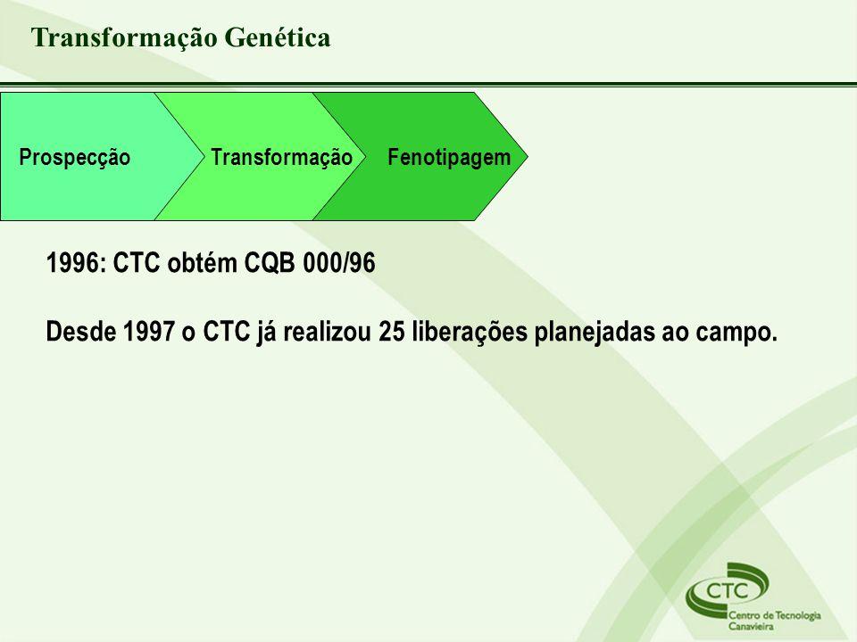 Transformação Fenotipagem Prospecção Transformação Genética 1996: CTC obtém CQB 000/96 Desde 1997 o CTC já realizou 25 liberações planejadas ao campo.