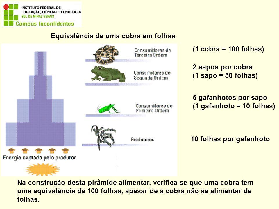 10 folhas por gafanhoto 5 gafanhotos por sapo (1 gafanhoto = 10 folhas) 2 sapos por cobra (1 sapo = 50 folhas) (1 cobra = 100 folhas) Equivalência de uma cobra em folhas Na construção desta pirâmide alimentar, verifica-se que uma cobra tem uma equivalência de 100 folhas, apesar de a cobra não se alimentar de folhas.