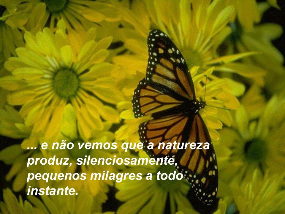 ... e não vemos que a natureza produz, silenciosamente, pequenos milagres a todo instante.