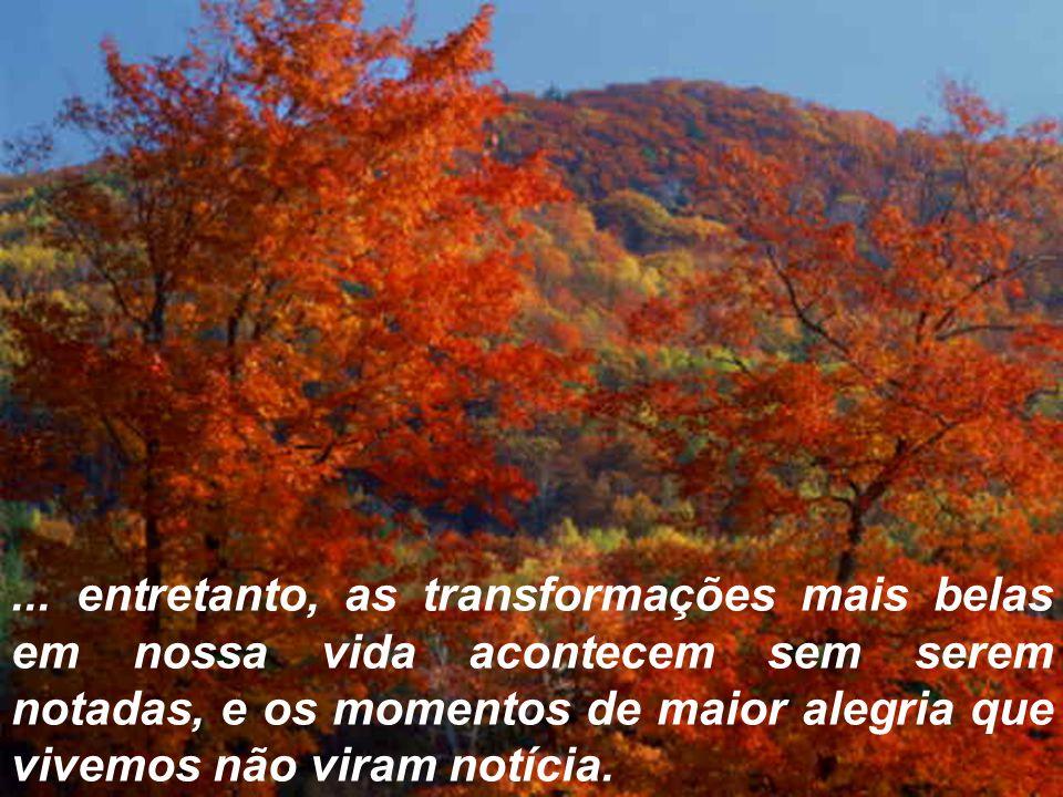 ... entretanto, as transformações mais belas em nossa vida acontecem sem serem notadas, e os momentos de maior alegria que vivemos não viram notícia.