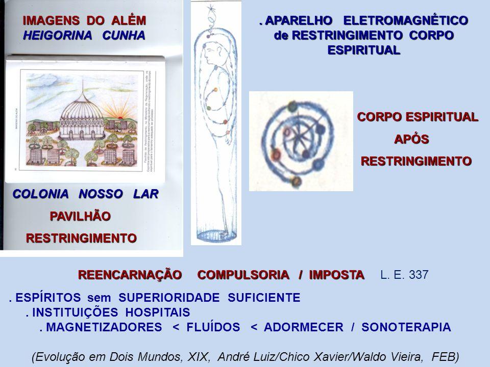 ESCOLHA DO ESPERMATOZÓIDE COM IDEAL CARGA GENÉTICA ESCOLHA DO ESPERMATOZÓIDE COM IDEAL CARGA GENÉTICA