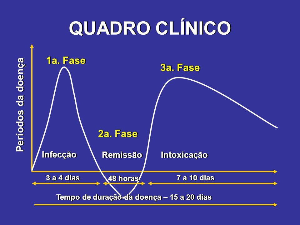QUADRO CLÍNICO 3 a 4 dias 48 horas 7 a 10 dias Tempo de duração da doença – 15 a 20 dias Infecção Remissão Intoxicação Períodos da doença 1a. Fase 2a.