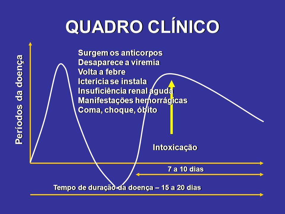 QUADRO CLÍNICO 7 a 10 dias Tempo de duração da doença – 15 a 20 dias Intoxicação Períodos da doença Surgem os anticorpos Desaparece a viremia Volta a