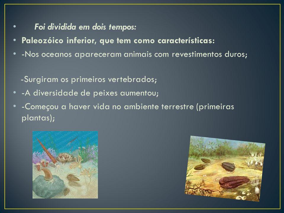 Foi dividida em dois tempos: Paleozóico inferior, que tem como características: -Nos oceanos apareceram animais com revestimentos duros; -Surgiram os primeiros vertebrados; -A diversidade de peixes aumentou; -Começou a haver vida no ambiente terrestre (primeiras plantas);