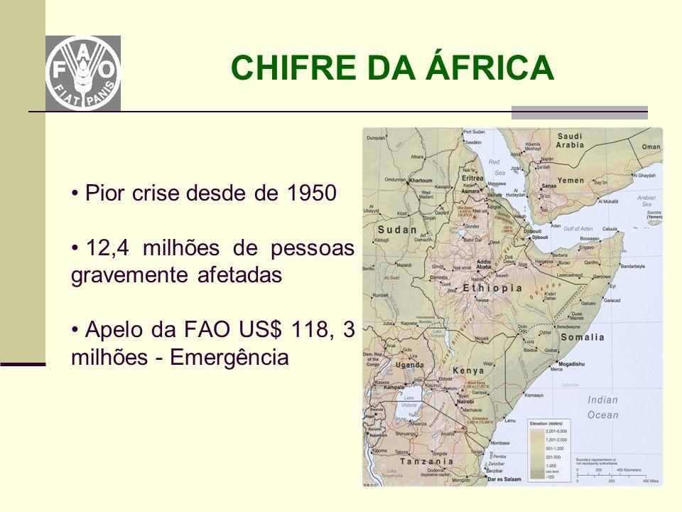 CHIFRE DA ÁFRICA Pior crise desde de 1950 12,4 milhões de pessoas gravemente afetadas Apelo da FAO US$ 118, 3 milhões - Emergência