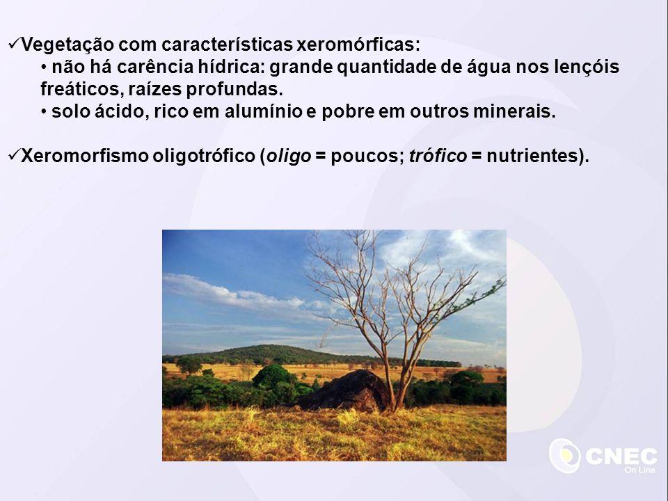 Vegetação com características xeromórficas: não há carência hídrica: grande quantidade de água nos lençóis freáticos, raízes profundas. solo ácido, ri