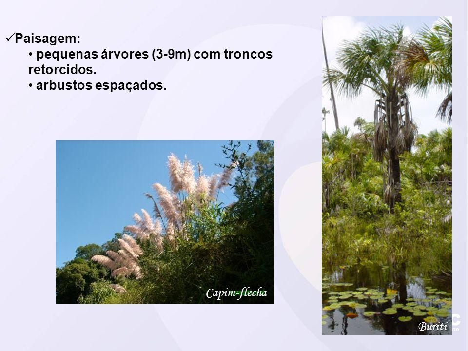 Paisagem: pequenas árvores (3-9m) com troncos retorcidos. arbustos espaçados. Buriti Capim-flecha