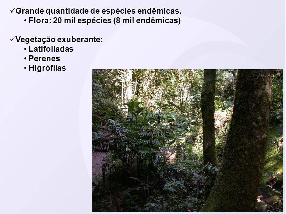 Grande quantidade de espécies endêmicas. Flora: 20 mil espécies (8 mil endêmicas) Vegetação exuberante: Latifoliadas Perenes Higrófilas