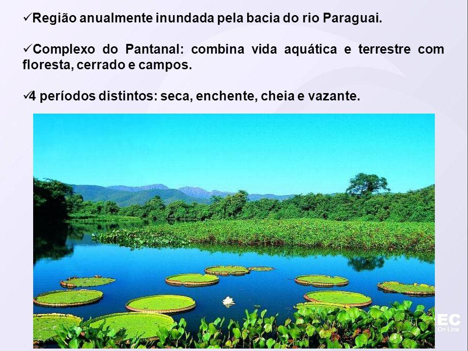 Região anualmente inundada pela bacia do rio Paraguai. Complexo do Pantanal: combina vida aquática e terrestre com floresta, cerrado e campos. 4 perío