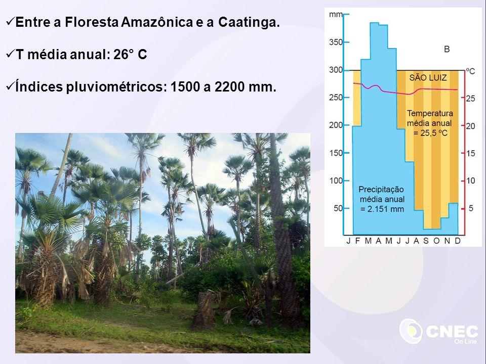 Entre a Floresta Amazônica e a Caatinga. T média anual: 26° C Índices pluviométricos: 1500 a 2200 mm.