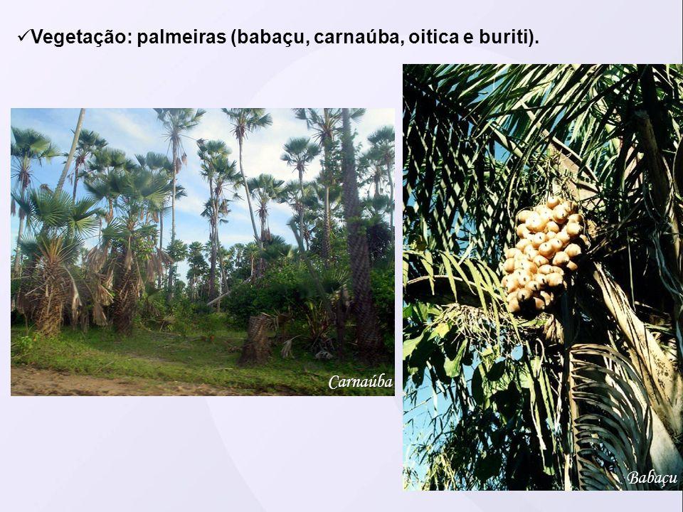 Vegetação: palmeiras (babaçu, carnaúba, oitica e buriti). Carnaúba Babaçu