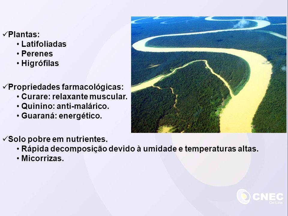 Plantas: Latifoliadas Perenes Higrófilas Solo pobre em nutrientes. Rápida decomposição devido à umidade e temperaturas altas. Micorrizas. Propriedades
