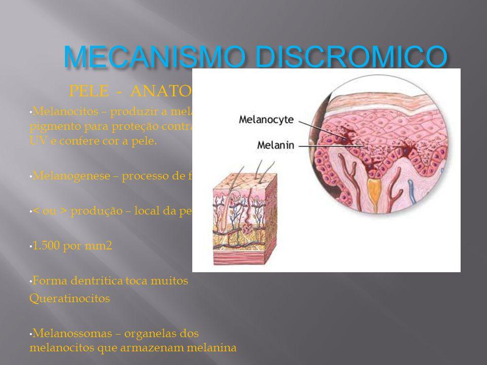 MECANISMO DISCROMICO PELE - ANATOMIA Melanocitos – produzir a melanina, pigmento para proteção contra radiação UV e confere cor a pele. Melanogenese –