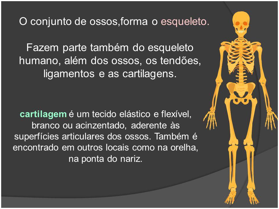 Fazem parte também do esqueleto humano, além dos ossos, os tendões, ligamentos e as cartilagens. O conjunto de ossos,forma o esqueleto. cartilagem é u