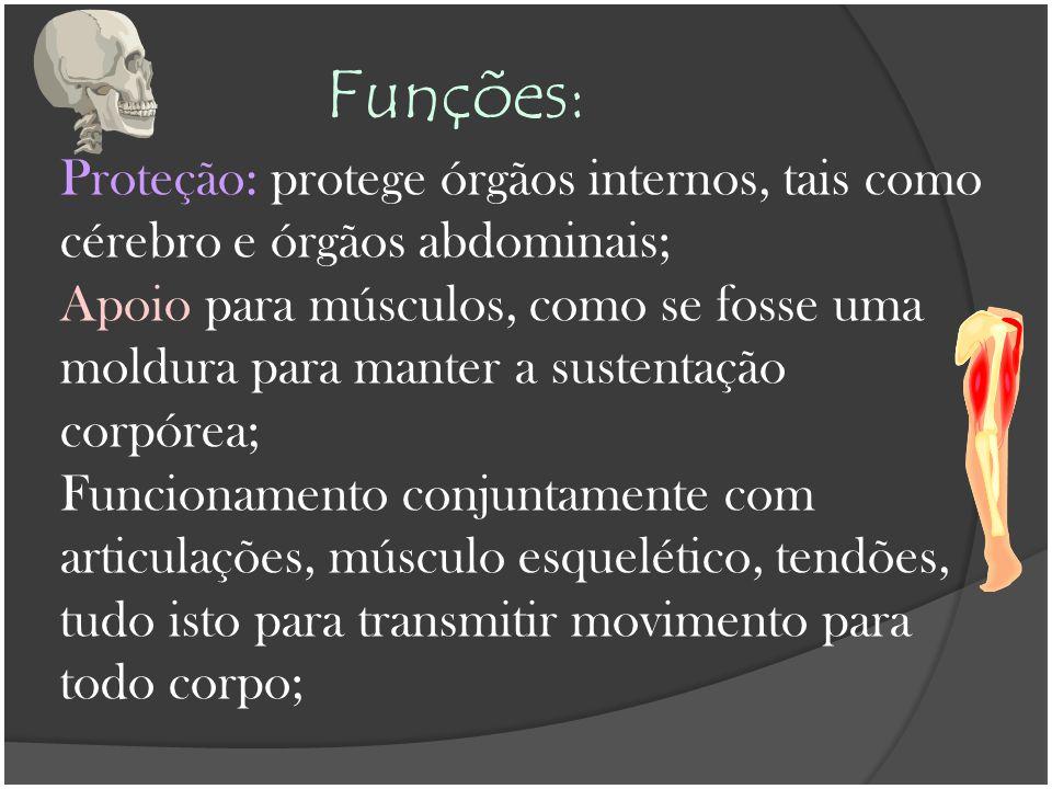 Funções: Proteção: protege órgãos internos, tais como cérebro e órgãos abdominais; Apoio para músculos, como se fosse uma moldura para manter a susten