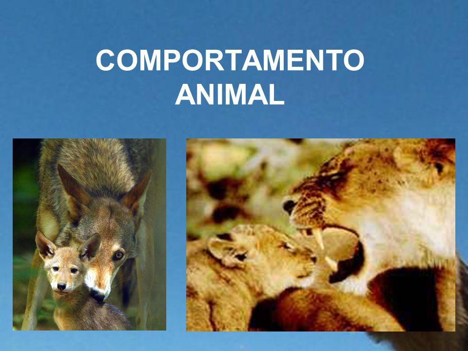 COMPORTAMENTO ANIMAL
