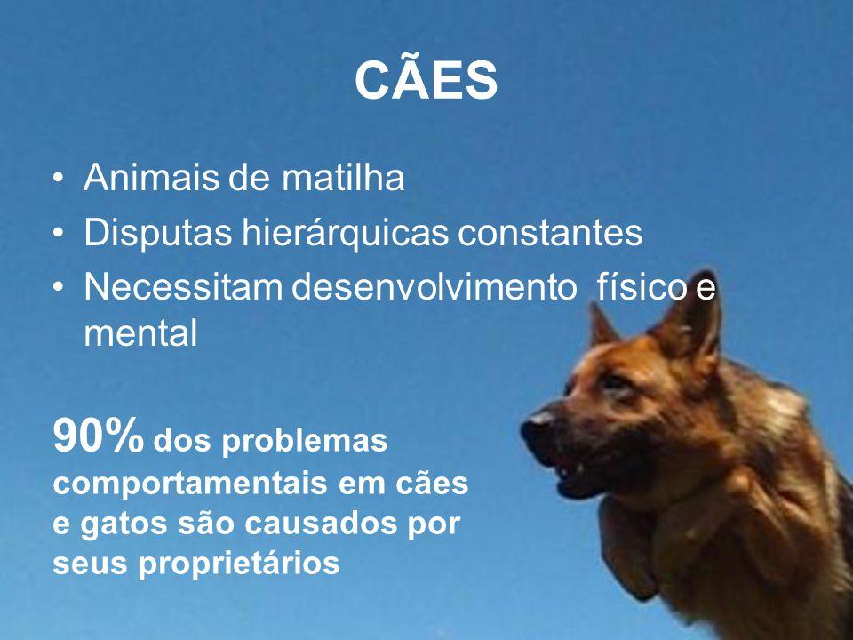 CÃES Animais de matilha Disputas hierárquicas constantes Necessitam desenvolvimento físico e mental 90% dos problemas comportamentais em cães e gatos