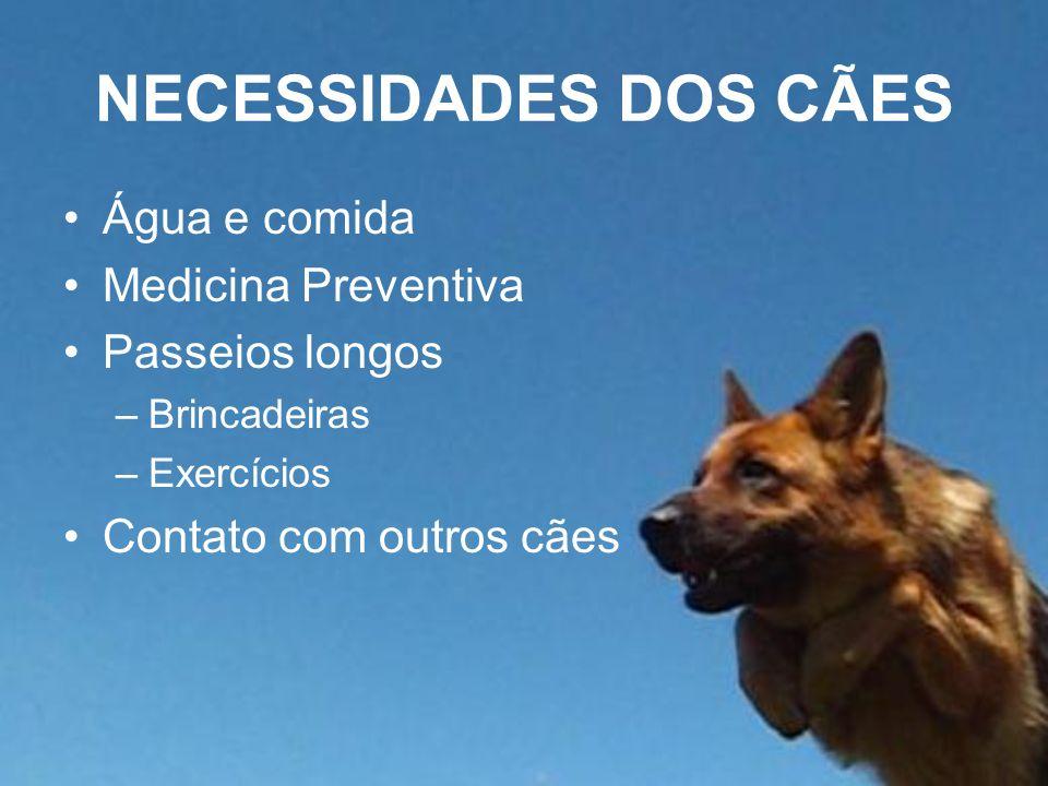 NECESSIDADES DOS CÃES Água e comida Medicina Preventiva Passeios longos –Brincadeiras –Exercícios Contato com outros cães