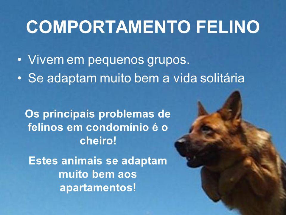 COMPORTAMENTO FELINO Vivem em pequenos grupos. Se adaptam muito bem a vida solitária Os principais problemas de felinos em condomínio é o cheiro! Este