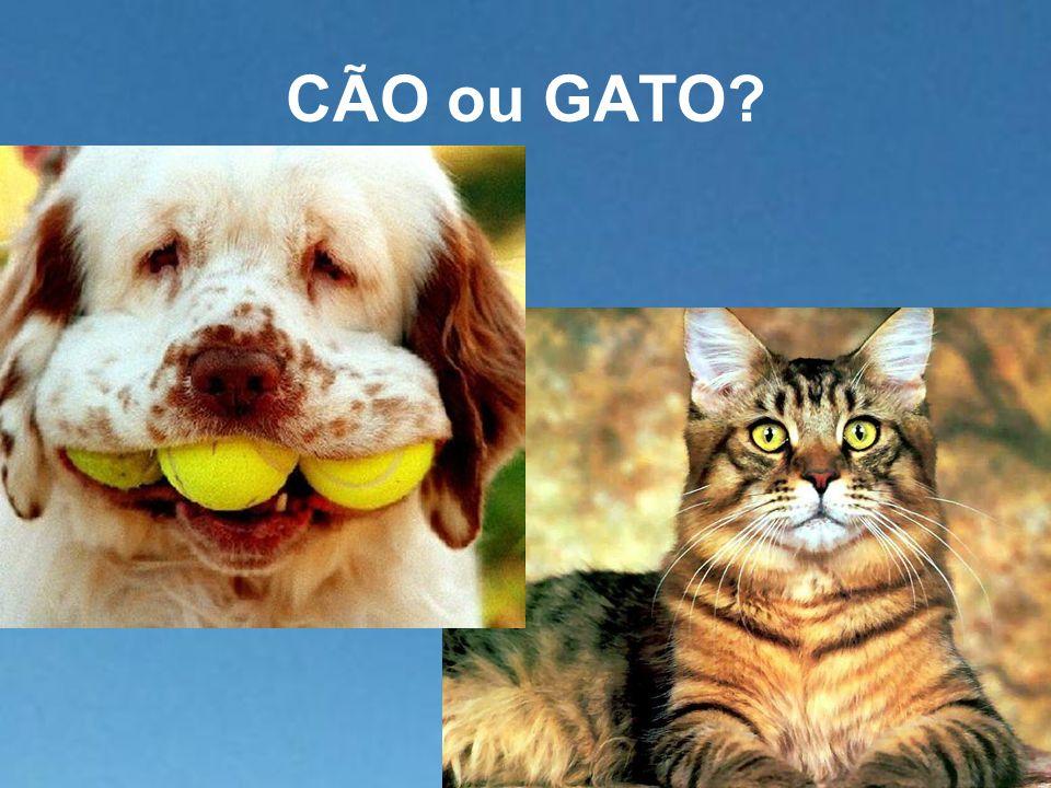 CÃO ou GATO?