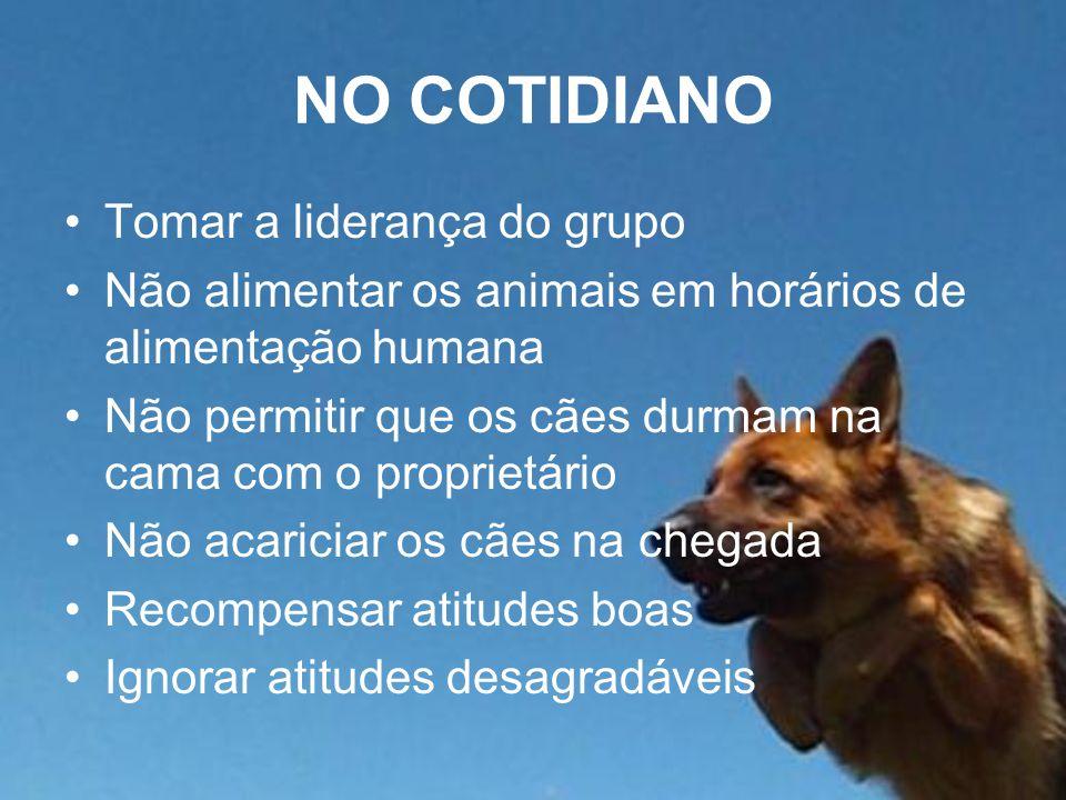 NO COTIDIANO Tomar a liderança do grupo Não alimentar os animais em horários de alimentação humana Não permitir que os cães durmam na cama com o proprietário Não acariciar os cães na chegada Recompensar atitudes boas Ignorar atitudes desagradáveis