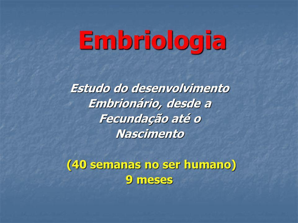 Embriologia Estudo do desenvolvimento Embrionário, desde a Fecundação até o Nascimento (40 semanas no ser humano) (40 semanas no ser humano) 9 meses 9