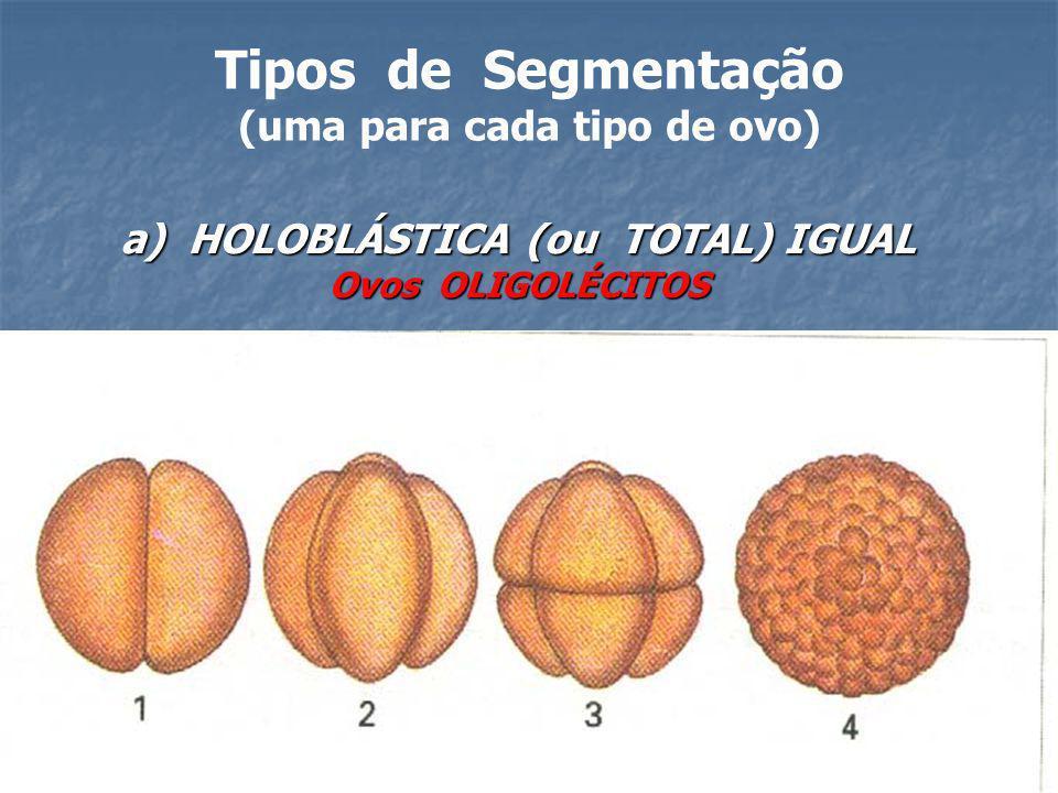 Tipos de Segmentação (uma para cada tipo de ovo) a) HOLOBLÁSTICA (ou TOTAL) IGUAL Ovos OLIGOLÉCITOS