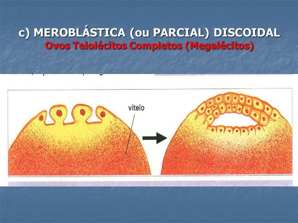 c) MEROBLÁSTICA (ou PARCIAL) DISCOIDAL Ovos Telolécitos Completos (Megalécitos)