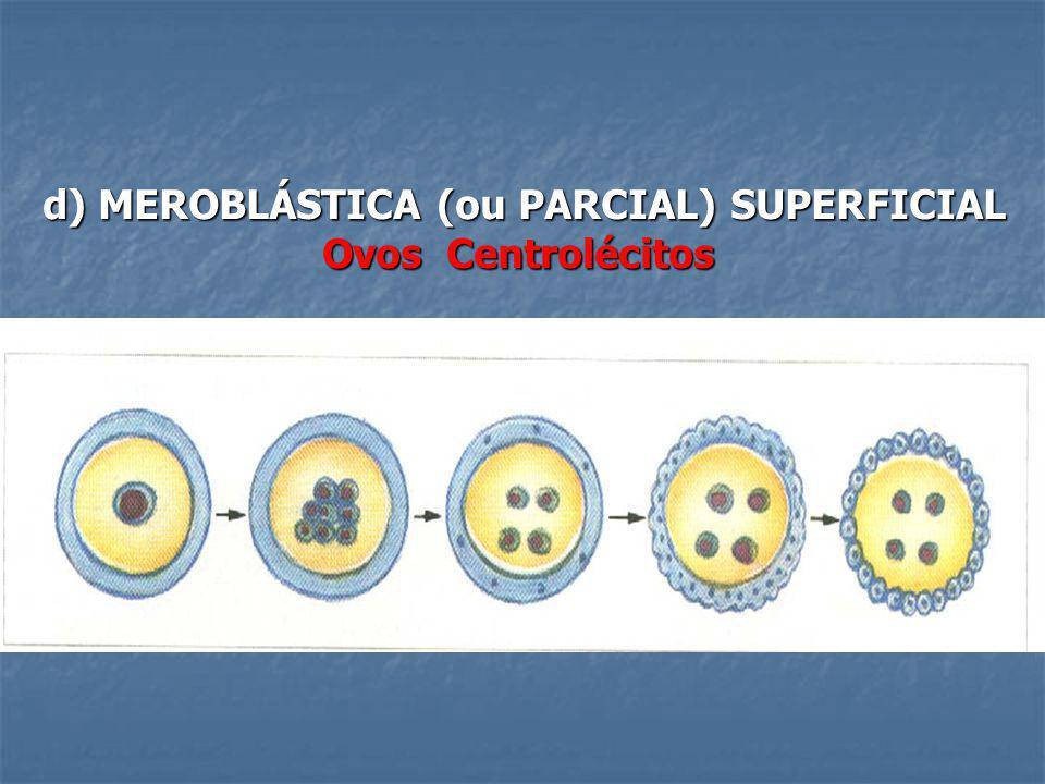 d) MEROBLÁSTICA (ou PARCIAL) SUPERFICIAL Ovos Centrolécitos