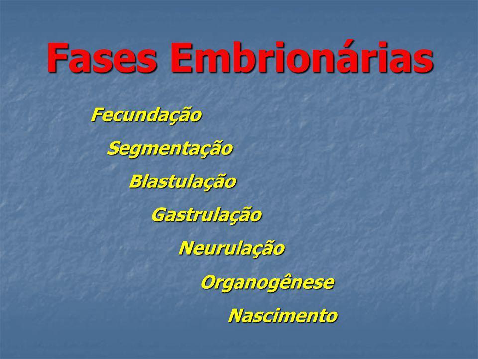 Fases Embrionárias Fecundação Segmentação Segmentação Blastulação Blastulação Gastrulação Gastrulação Neurulação Neurulação Organogênese Organogênese