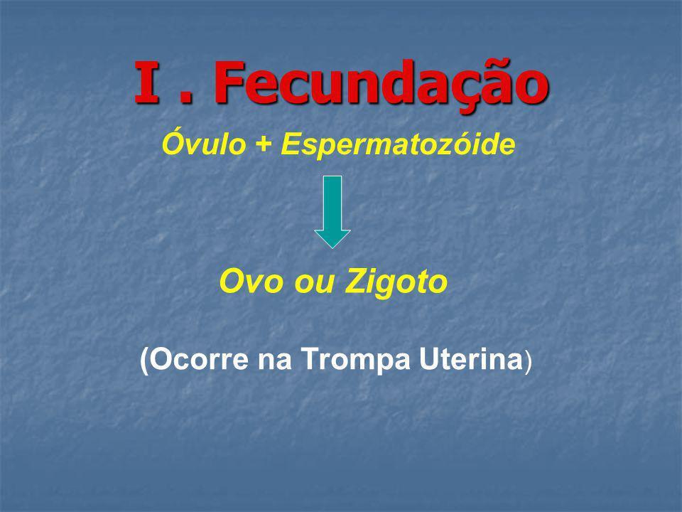I. Fecundação Óvulo + Espermatozóide Ovo ou Zigoto (Ocorre na Trompa Uterina )