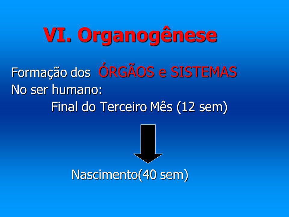 VI. Organogênese Formação dos ÓRGÃOS e SISTEMAS Formação dos ÓRGÃOS e SISTEMAS No ser humano: No ser humano: Final do Terceiro Mês (12 sem) Final do T
