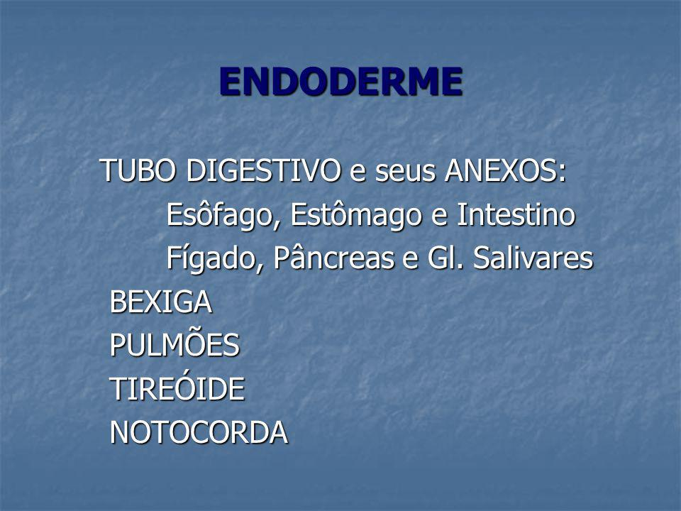ENDODERME TUBO DIGESTIVO e seus ANEXOS: TUBO DIGESTIVO e seus ANEXOS: Esôfago, Estômago e Intestino Esôfago, Estômago e Intestino Fígado, Pâncreas e G