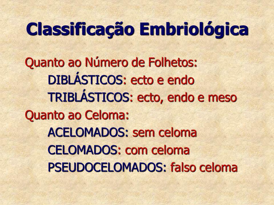 Classificação Embriológica Quanto ao Número de Folhetos: Quanto ao Número de Folhetos: DIBLÁSTICOS: ecto e endo DIBLÁSTICOS: ecto e endo TRIBLÁSTICOS:
