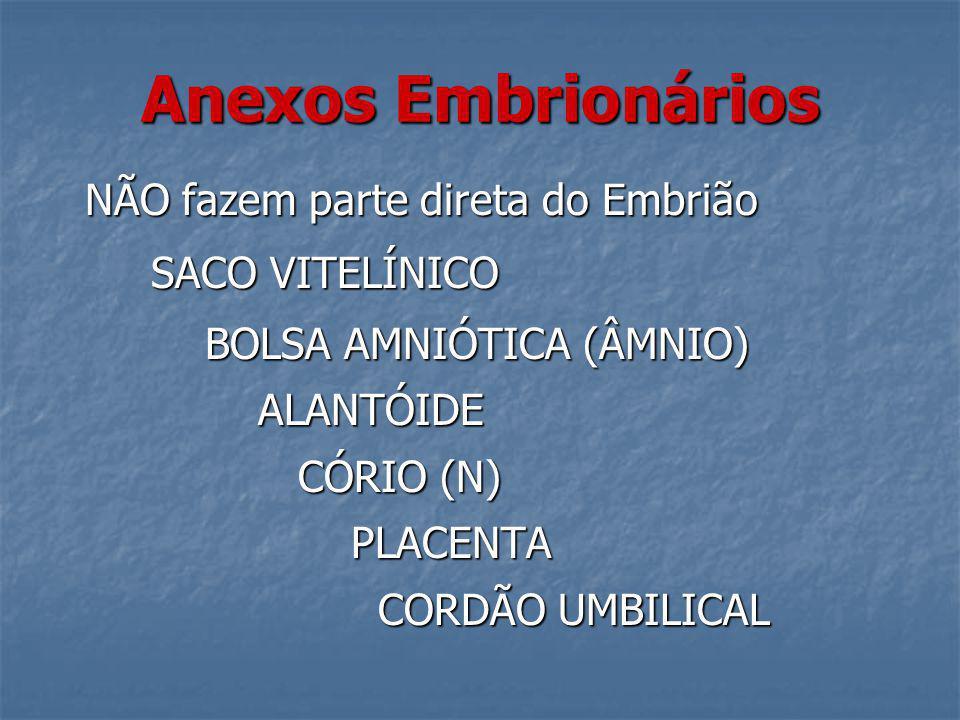 Anexos Embrionários NÃO fazem parte direta do Embrião NÃO fazem parte direta do Embrião SACO VITELÍNICO SACO VITELÍNICO BOLSA AMNIÓTICA (ÂMNIO) BOLSA